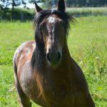 Reiterferien in Sachsen – Spaß und Unterhaltung für alle Beteiligten